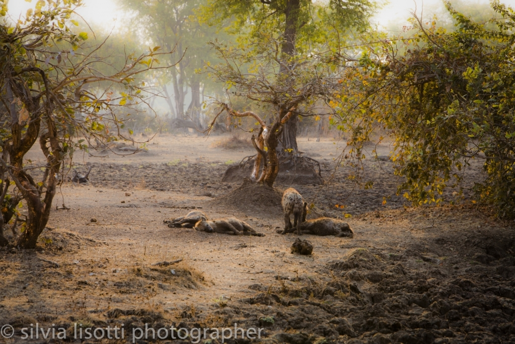 Iene - South Luangwa National Park - Zambia